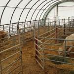 Beef Cattle Housing Barn