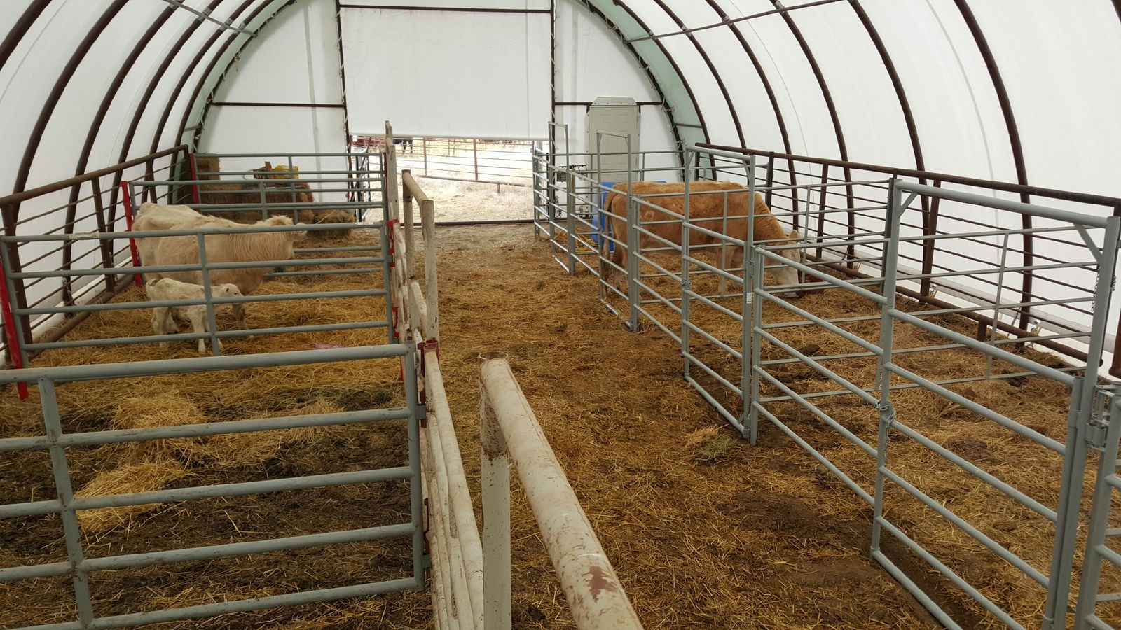 Keep Your Cows Warm In Winter During Calving Season