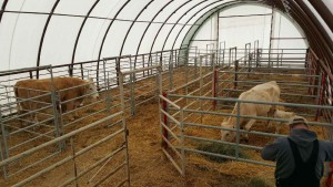 Cattle Handling Barn