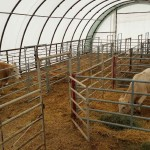Dairy Cattle Barn